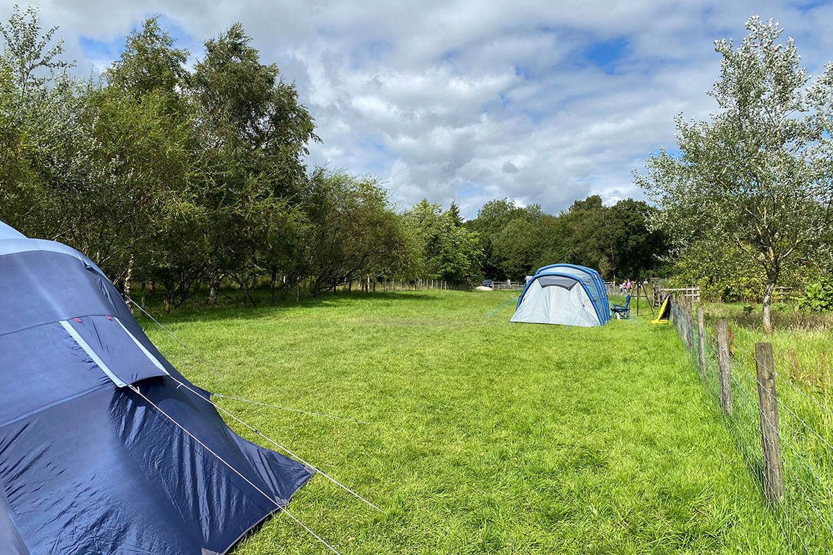Camping & Tents - Bowland Wild Boar Animal Park