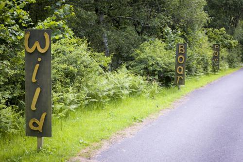 Bowland Wild Boar Park 040617 002 © Nick Dagger Photography