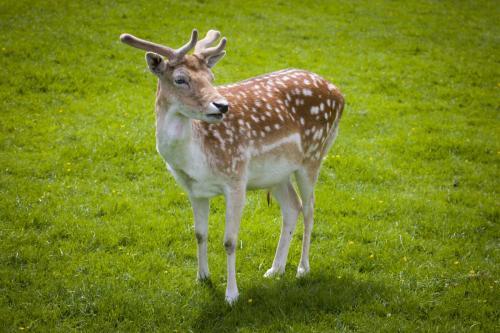 Bowland Wild Boar Park 040617 028 © Nick Dagger Photography