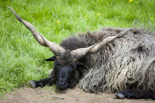 Bowland Wild Boar Park 040617 029 © Nick Dagger Photography