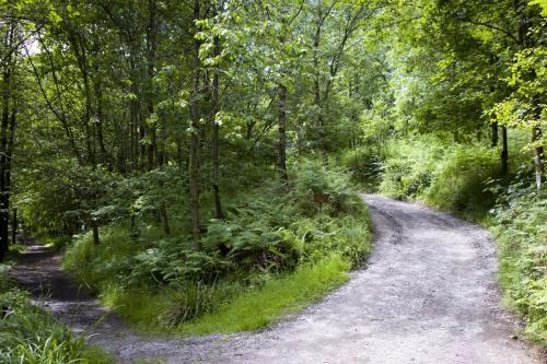 Bowland Wild Boar Park 040617 045 © Nick Dagger Photography