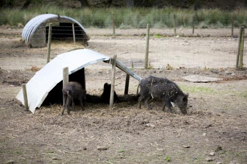 Bowland Wild Boar Park 040617 083 © Nick Dagger Photography