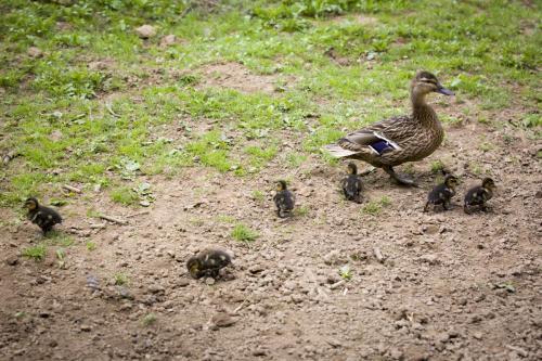 Bowland Wild Boar Park 040617 113 © Nick Dagger Photography