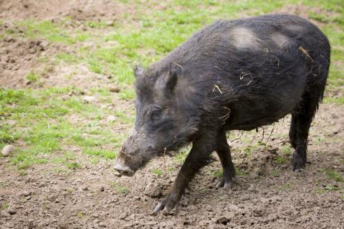 Bowland Wild Boar Park 040617 115 © Nick Dagger Photography