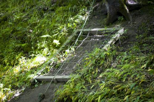 Bowland Wild Boar Park 040617 128 © Nick Dagger Photography