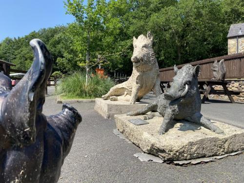 Bowland Wild Boar Park June 2020
